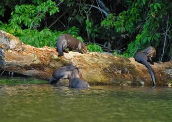 puerto-maldonado-fauna(1)